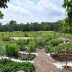 Hollins-Community-Garden-La