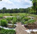 Hollins-Community-Garden