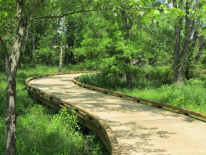 Wetland-Trail-2