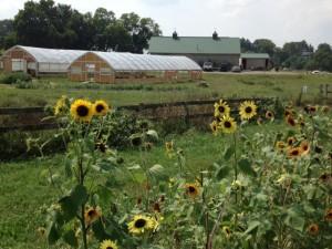 Urban Farm3