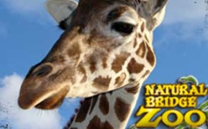 Natural Bridge Zoo