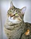 SPCA Cat Adopt