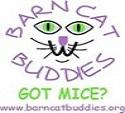 Barn Cat Buddies