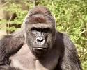 Cincinnati Zoo photo