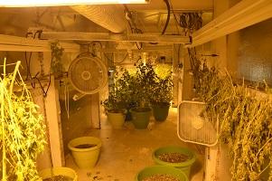Underground Marijuana