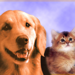 """Big animal adoption weekend ahead to """"Clear the Shelters"""""""
