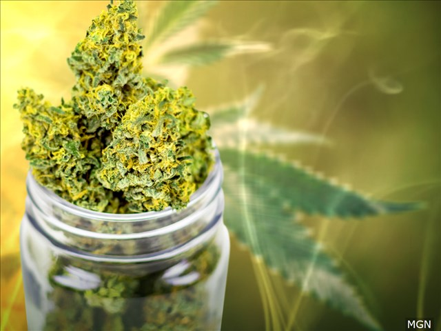 NORML pushes back against Bedford Sheriff's claim THC is addictive