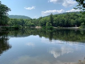 Potentially toxic algae bloom at popular area forest pond